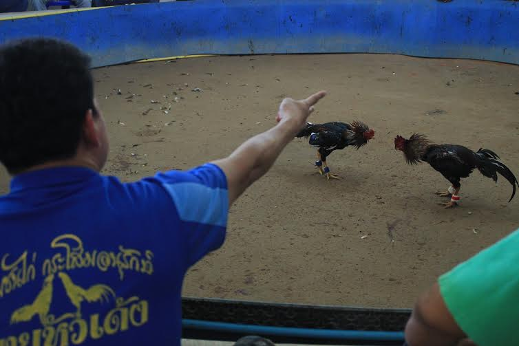 The book touches on traditional pastimes like cock-fighting