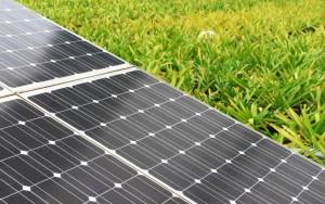 Neo Solar seeking Vietnamese partner for 800-MWp panel JV